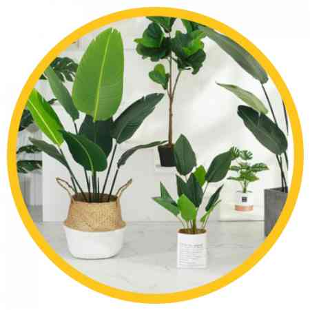 Replica Plant