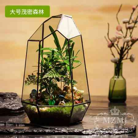 Micro landscape finished creative green plant moss micro landscape ecological bottle moss plant office fresh ecological pot